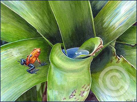 V.Earle_Frog-and-bromeliad-4web-_180