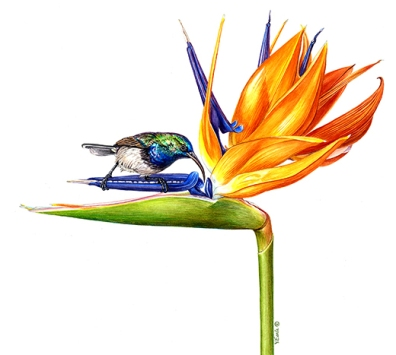 bird of paradise _2x2 180sm
